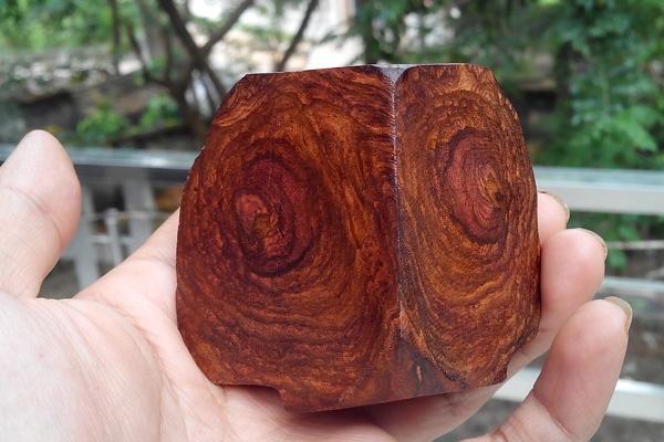 Gỗ sưa là gì? Tại sao gỗ sưa đắt và quý?